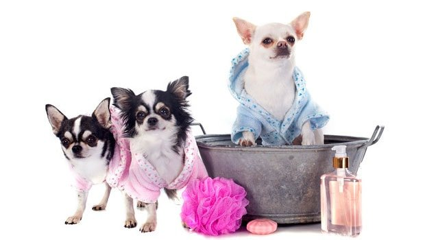 Everything You Need To Know About Dog Grooming: The Ultimate Guide