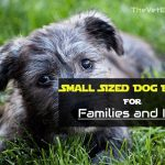 Small Sized Dog Breeds For Families and Kids
