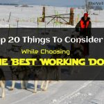 Top 20 Things To Consider While Choosing The Best Working Dog
