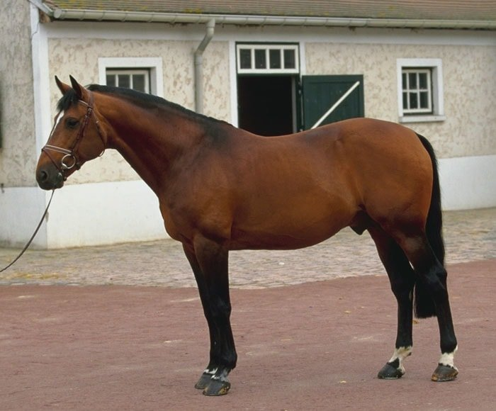 french_trotter