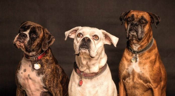 Common Dog Allergies: Dog Allergies Symptoms, Prevention and Treatment