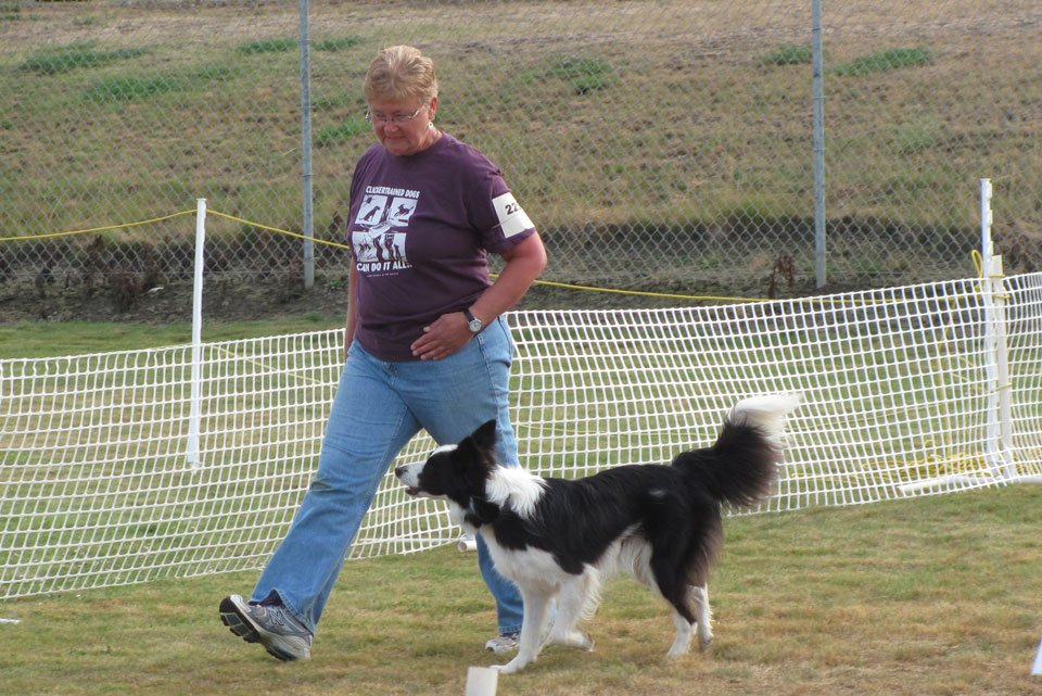 Obedience Dog Training: Heel Walk of Dog Without Leash
