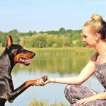 How To Train Your Dog: Principles of Basic Obedience Dog Training