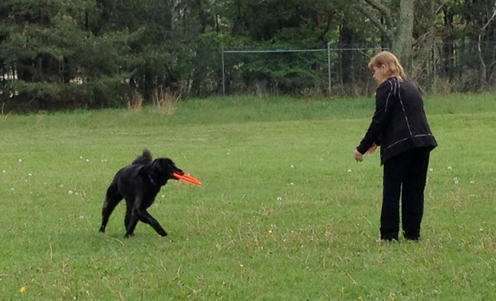 Obedience Dog Training: Leave It Command