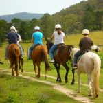 A Group of New Horse Rider