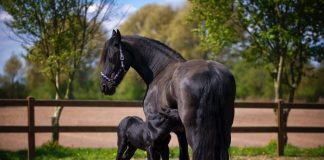 Most Common Horse Diseases: You Must Know As Horse Owner