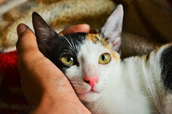 Controlling of Cat with Soft Hand