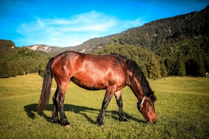 Discomfort of Horse Due to Laminitis