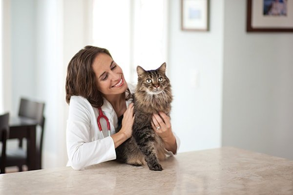 General cat Care- Visit To Your Vet