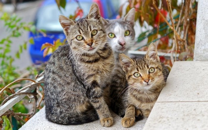 Selection of Best Cat Breeds for You