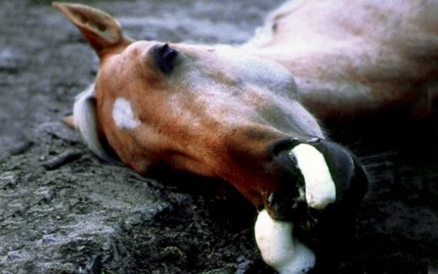 Signs Of African Horse Sickness
