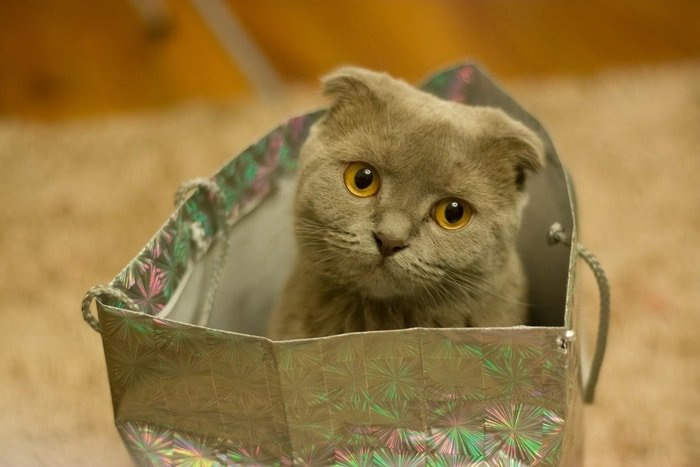 Transportation of Cat in a Comfortable Bag