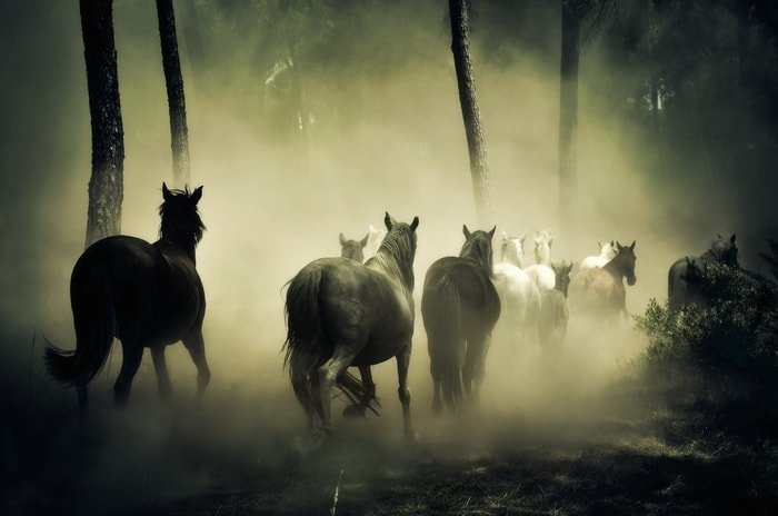 Horse Behavior- Horses are Staying in Group