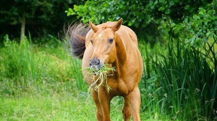 A Healthy Horse Taking Grass