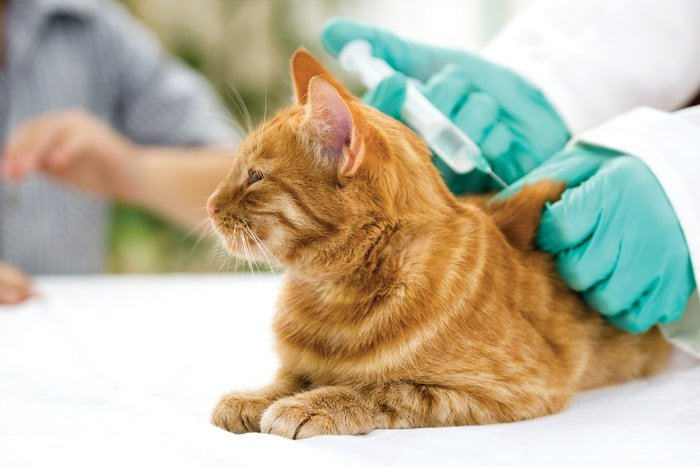 Control of Cat During Vaccination