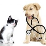 Lovely Healthy Pets