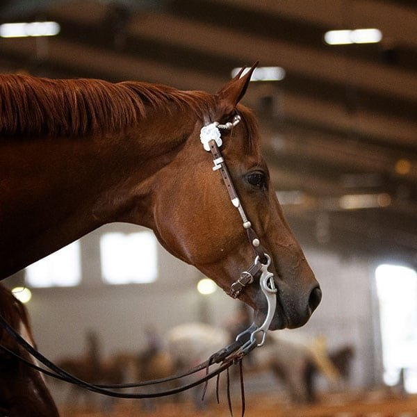 Artificial Lighting for Horse