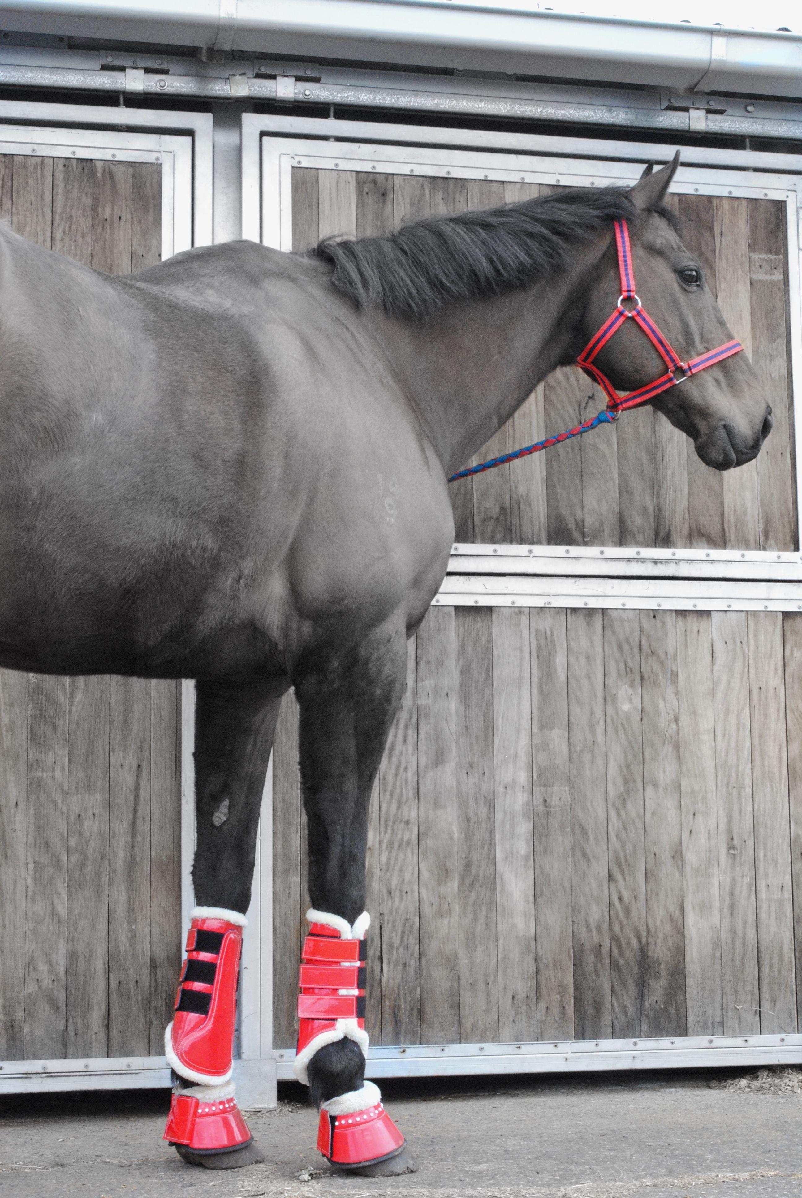 Brushing Injury in Horse Feet
