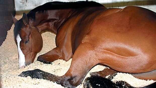 Diarrhea in Horse- Colic