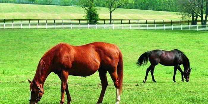 Hormone Therapy for Horse