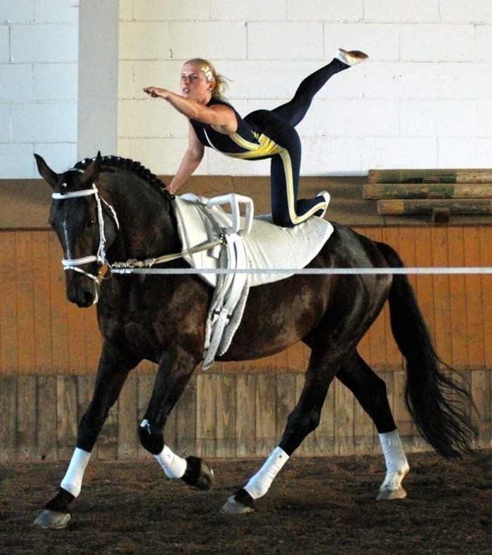Horse Training- Equestrian Sports