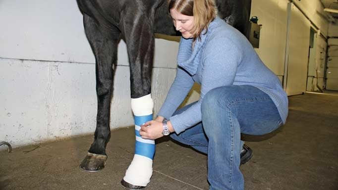 Horse Wound Treatment