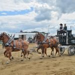 Draft Horse Breeds