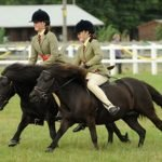 Good Pony Horse Breeds