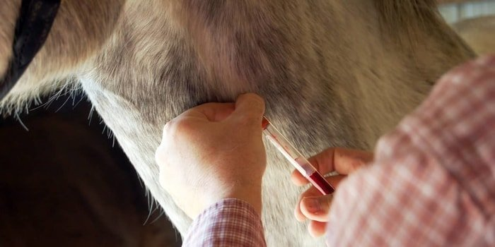 Diagnosis of Equine Infectious Anemia