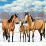 Beautiful Buckskin Horse Family