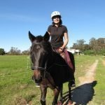 The standardbred is a friendly, steady, and calm horse and they enjoy spending time with their human companions which making them ideal for all horse riders and owners.