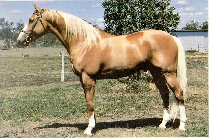 Uses of Palomino