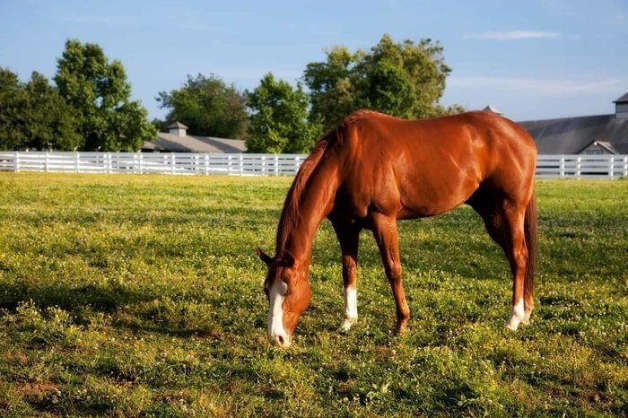 COPD in Horses