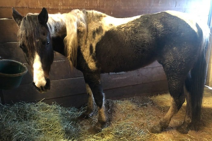 Neglect of Horse