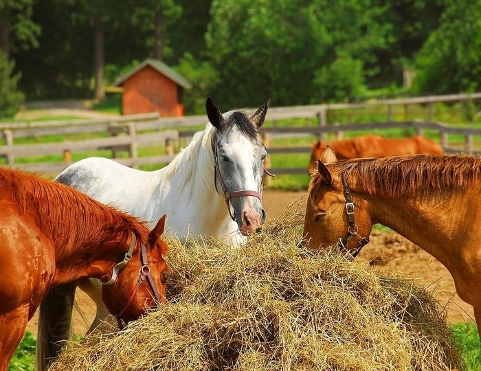 Horse Feed Supply