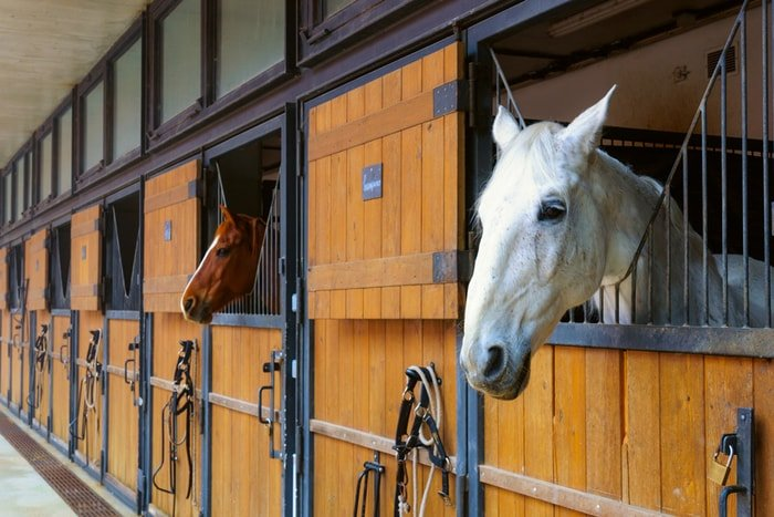 Windows of Stable