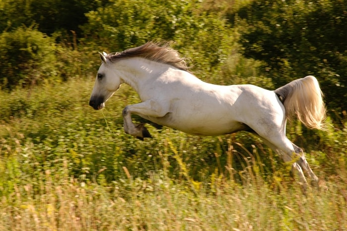 Diagnosis of Allergic Reaction in Horses