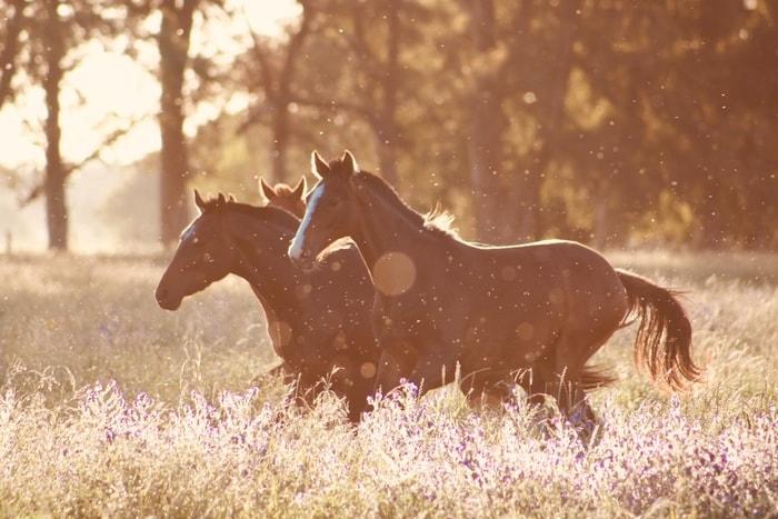 Environmental Horse Allergies