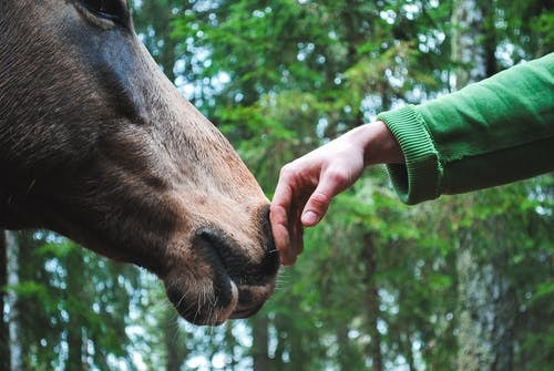 Equine Allergy- Direct Contact