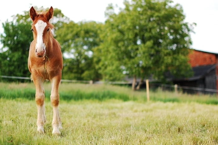 Equine Allergy- Insect Bites