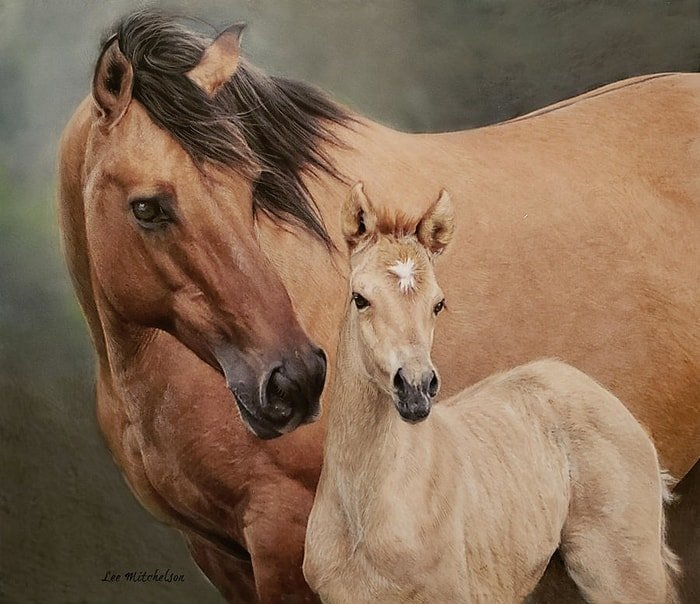 Genetic Build up of Breed- Mustang