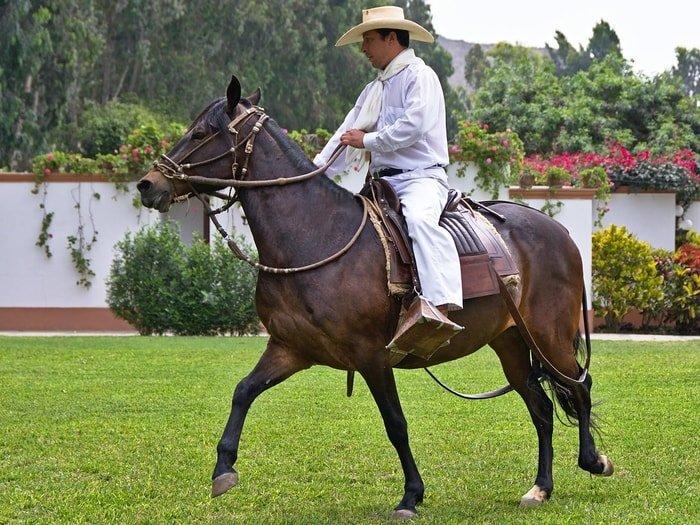 History of Peruvian Horse