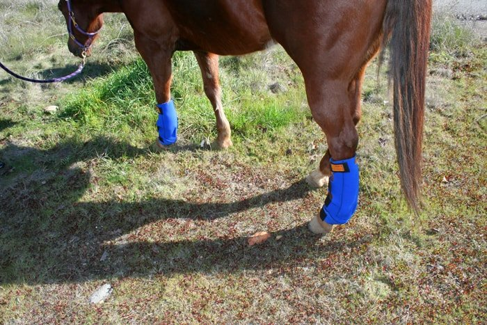 Pain Relief For Horse