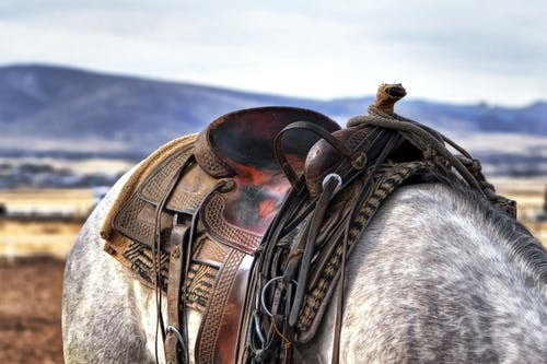 Touch by Horse Tack