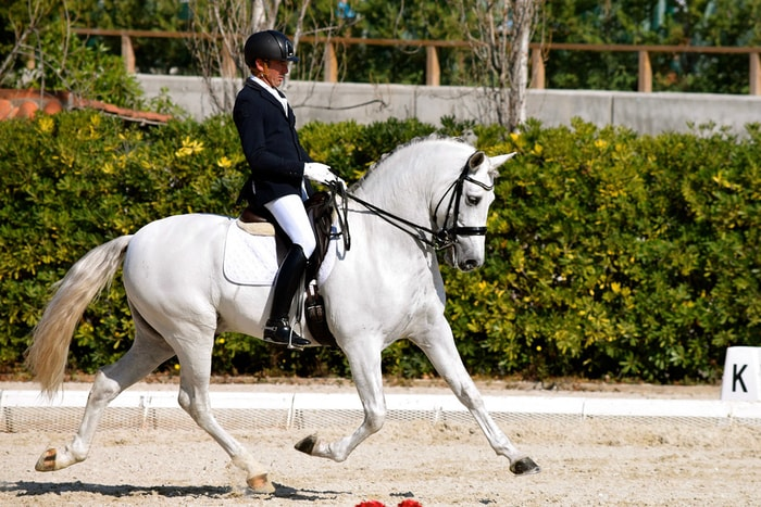 Dressage By Andalusian