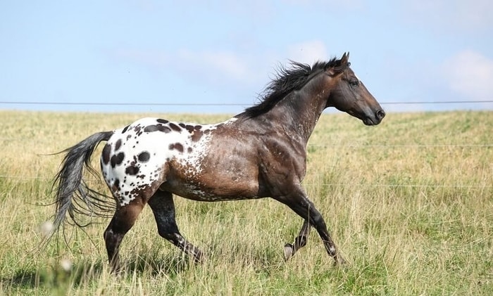 Health Problem of Horse