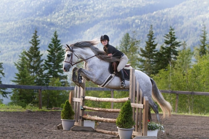 Jumping By Andalusian Horse