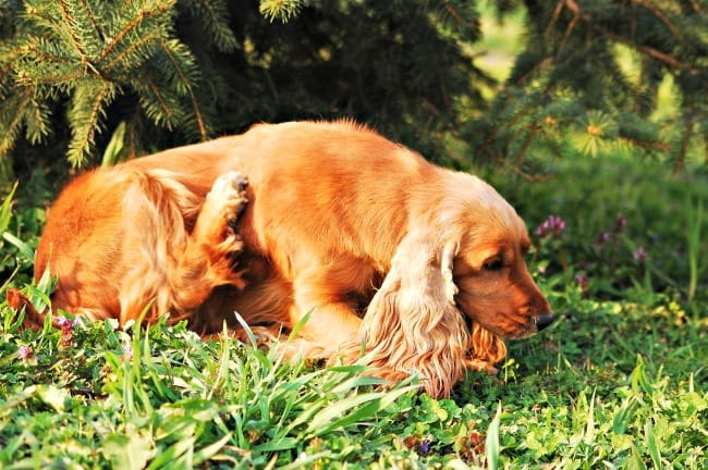 Restlessness of the dog