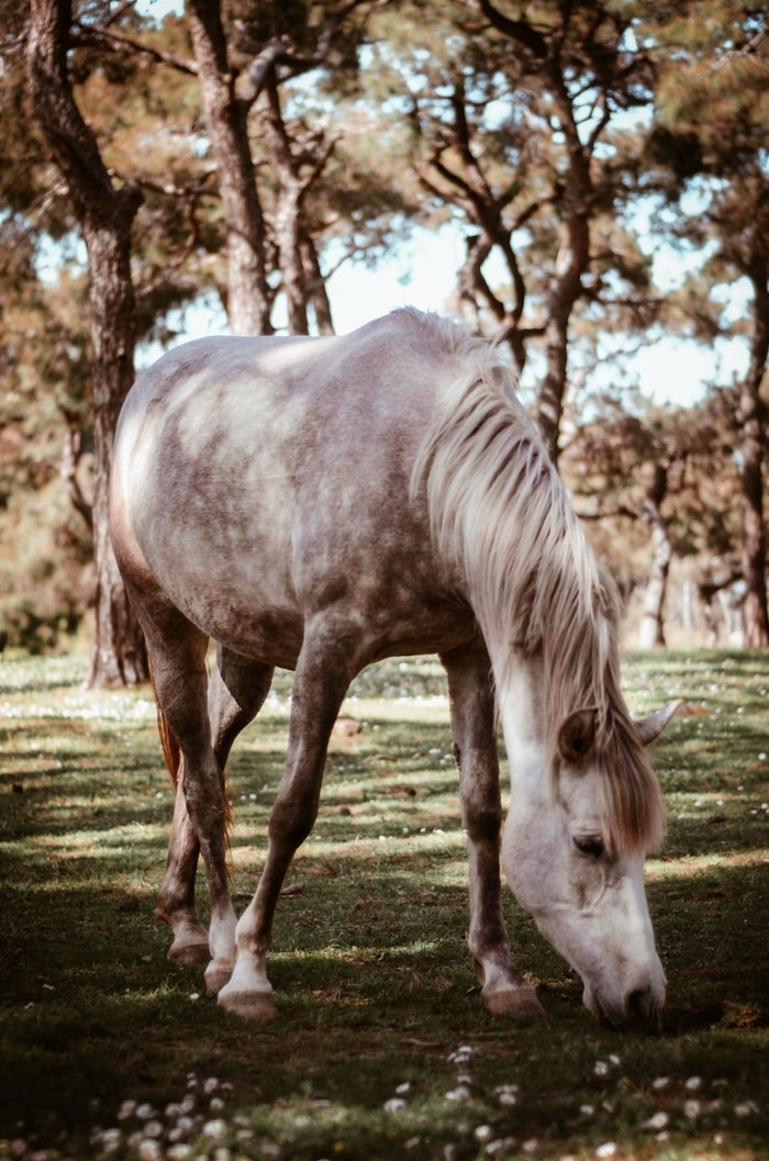 Spotted Horse