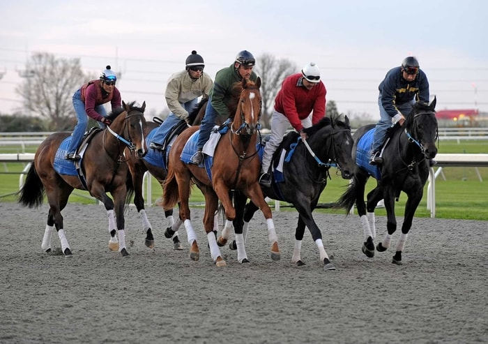 Thoroughbred Racing Horse